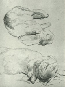 Beatrix Potter sketch