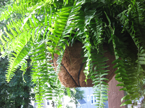 hanging plant