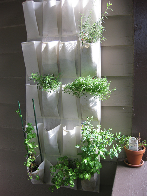 Photo of shoe rack herb garden