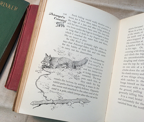 fox interior illustration with type