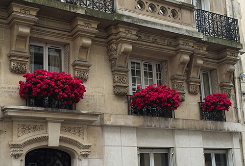 Paris Flower Boxes