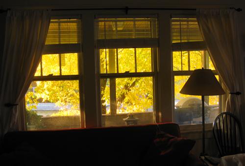 autumn fall tree yellow