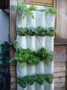canvas shoe vertical garden