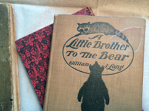 photo of Little Brother to the Bear cover
